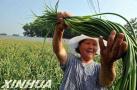广阳区统筹推进扶贫开发与现代农业