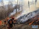 内蒙古阿尔山好森沟林场发生森林火灾 已投入近千人扑救
