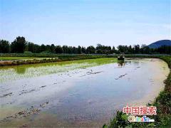 河南罗山:机械化育秧助力春耕生产