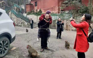背着81岁瘫痪母亲到贵州看猴,他感动了全网!