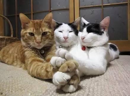 """""""吸猫""""须谨慎,每只猫都可能是死神"""